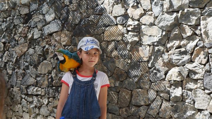 Шоу-птиц-в-Порт-Авентура