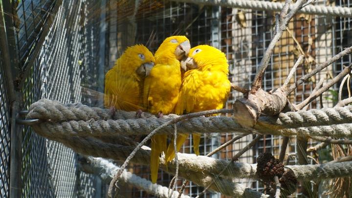 Попугаи-в-зоопарке-Барселоны