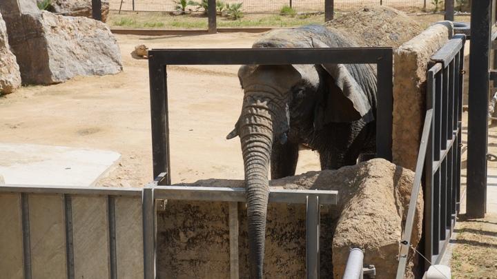 Слон-зоопарк-Барселона