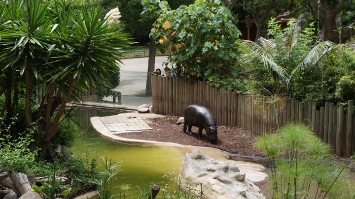 Бегемот-Зоопарк-Барселоны