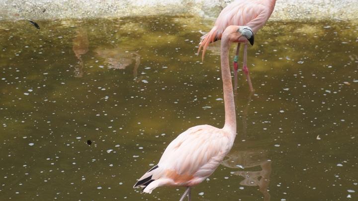 Розовые-фламинго