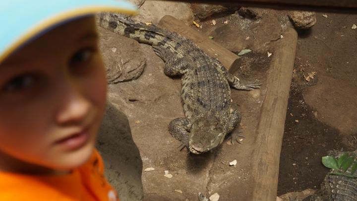 Крокодил-зоопарк-барселоны