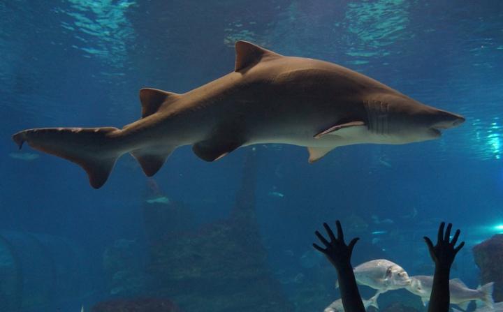 Акула-океанариум -Барселоны