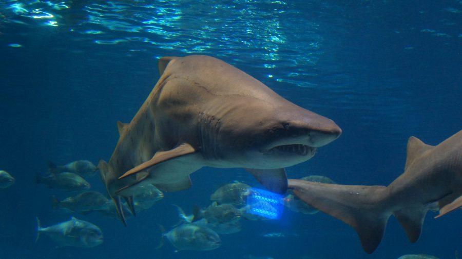 Акула-аквариум-Барселоны